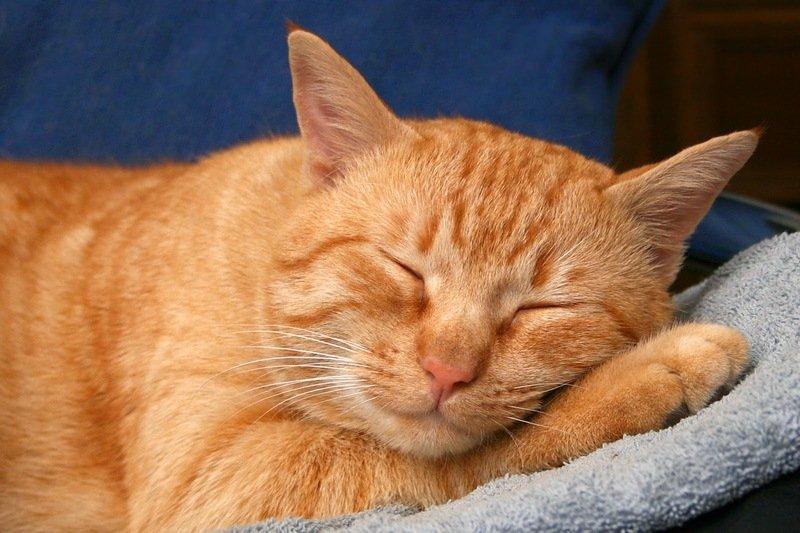 Как давать Празиквантел кошке