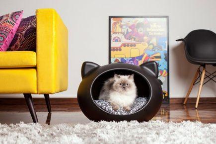 Гималайская кошка сидит в чёрном кошачьем домике на пятнистой подушке
