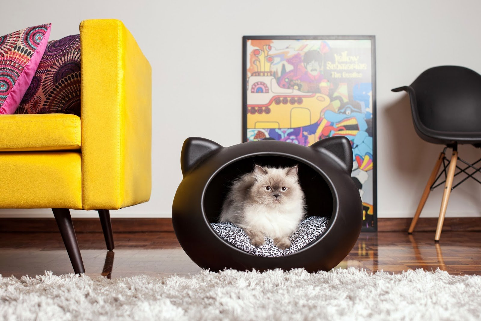 комната кошек картинки