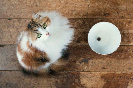 Кот у миски