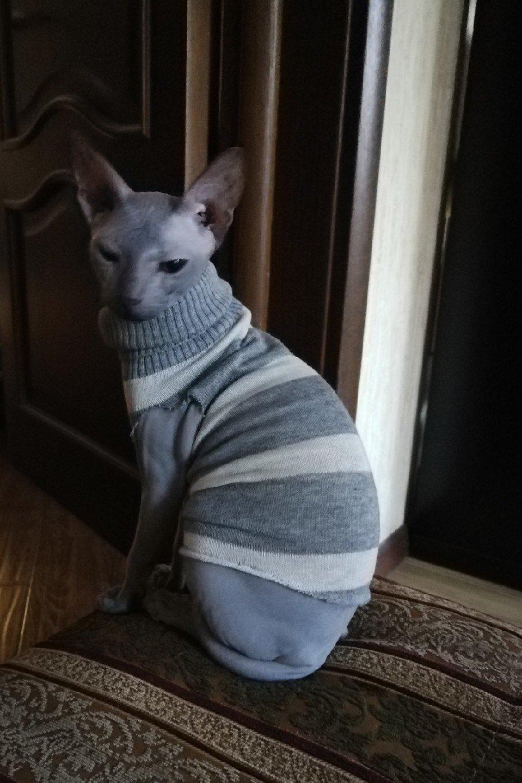 одежда для сфинксов особенности выбора костюма для животных этой