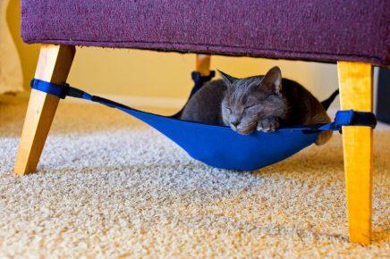Кот в гамаке