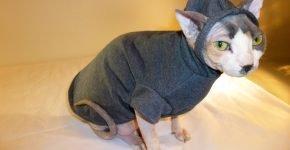 Кот в костюме с капюшоном