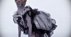 Кошка в костюме принцессы