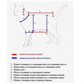 Как снять мерки с кошки