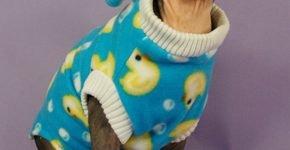 Сфинкс в пижаме
