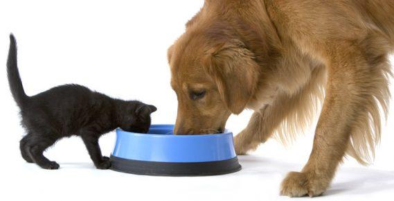 Кот и собака едят