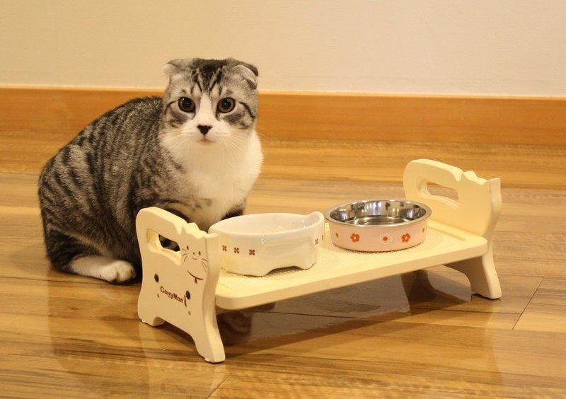 Правильный уход и питание для шотландских вислоухих котят