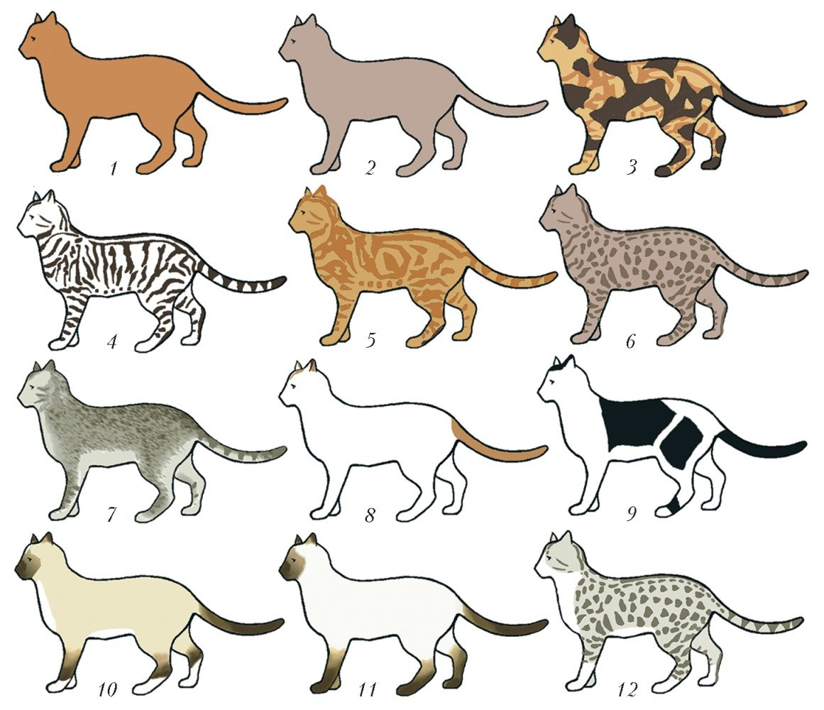 хорошо все кошачьи список с картинками разных областях