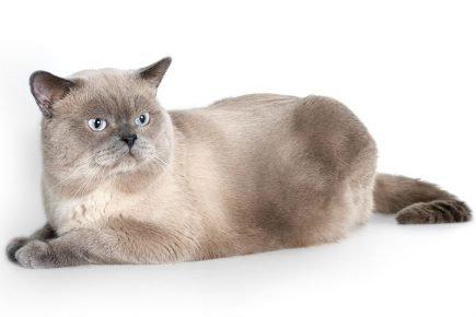 Потемневший кот