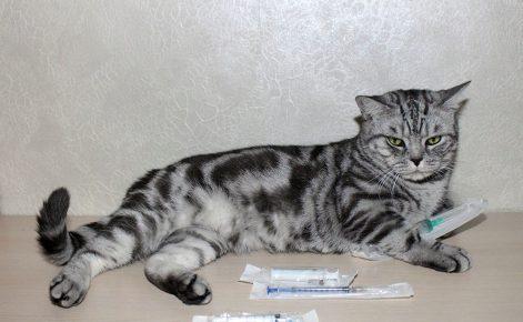 Кот и шприц