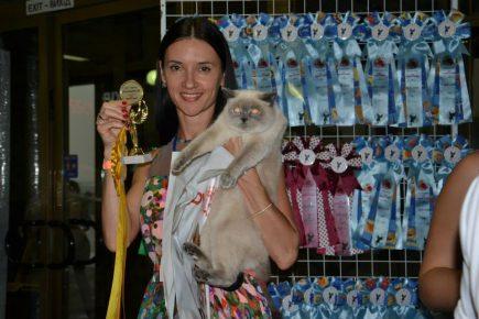Кот на выставке