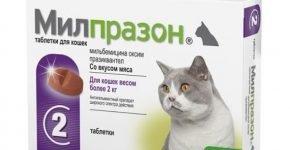 Таблетки от глистов для кошек Милпразон