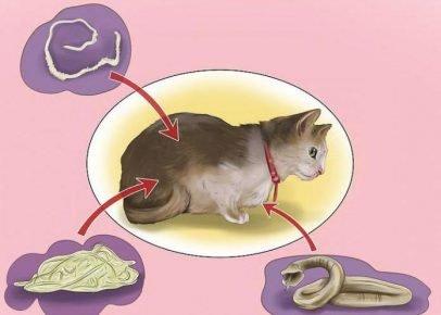 Кошка и разные глисты