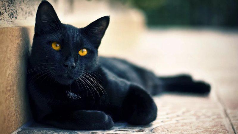 Ронколейкин для кошек дозировка