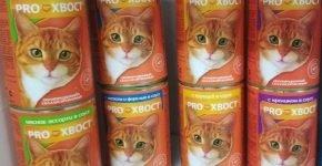Прохвост для кошек