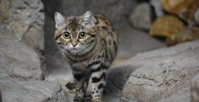 Кошка среди камней