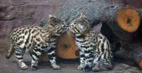 Два котёнка в зоопарке