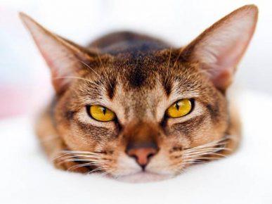 Сладкая кошачья морда