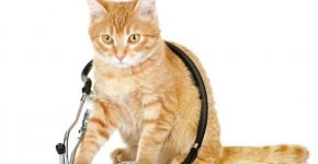 Рыжий кот-врач