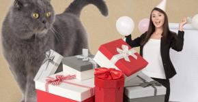 Что подарить коту на 23 февраля
