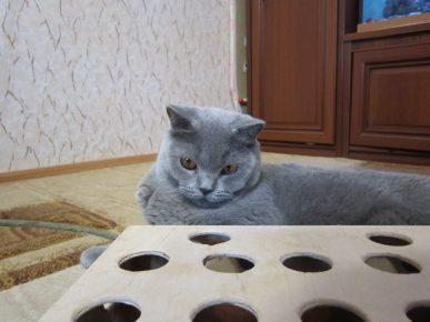 Головоломка для кота