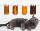 Кот смотрит на баночки с таблетками