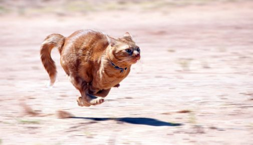 Кошка во время бега