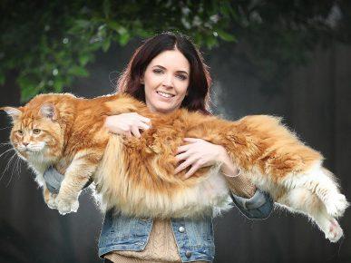 Самый длинный кот в мире