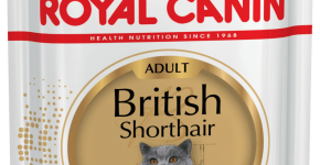 Royal Canin British Shorthair Adult желе