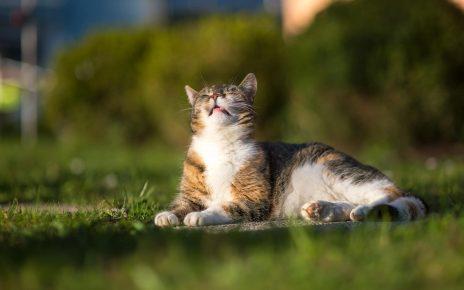 Кошка дышит чистым воздухом