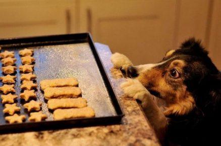Печенье для собаки