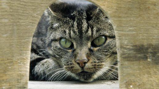 Кот смотрит в норку