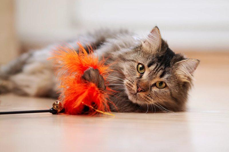 Синулокс для кошек инструкция по применению