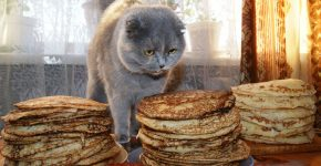 Кот и много блинов