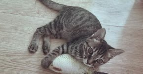 Котёнок с рыбой