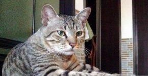 Невозмутимый кот