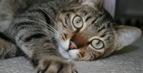 Зеленоглазый кот
