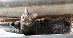 Кот, лежащий на солнце
