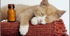 Кошка и таблетки