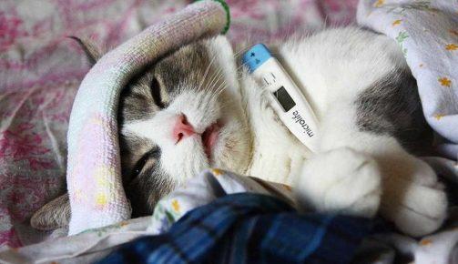 Котёнок заболел