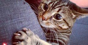 Кошка с чёрными глазами