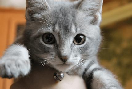 Котёнок с маленькими усами