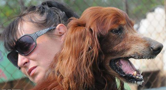 Пёс Чак в старости