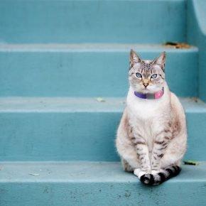 Кошка в ошейнике с GPS