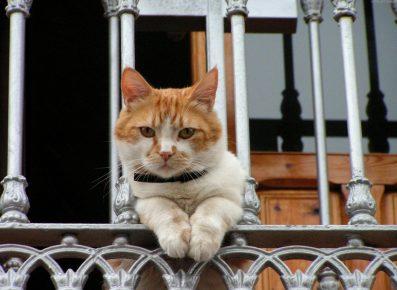 Кошка на перилах