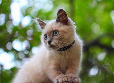 Котёнок в ошейнике