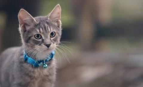 Котёнок в ошейнике с бубенчиком