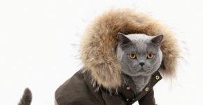 Кот в куртке