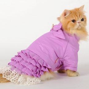 Кошка в фиолетовой курточке